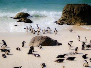 Pinguïn Tours