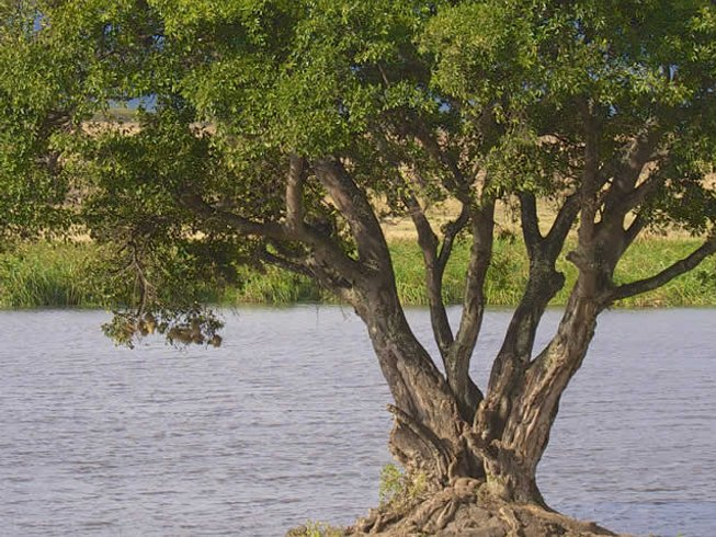 4 Days Best Places Tanzania Safari