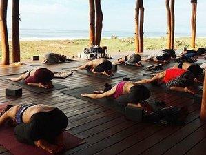 6 Day 25 Hour Yoga Teacher Training at Playa Viva Eco-Friendly Retreat in Mexico