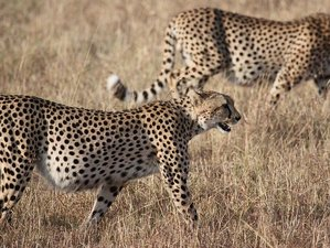 6 Days Battlefields Route Safari in South Africa