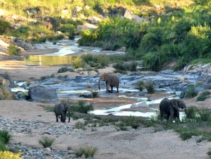 5 Days Luxury Lodge Safari in Balule Private Game Reserve, South Africa
