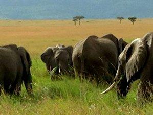 3 Days Out-of-Africa Samburu Safari in Kenya