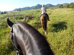 5 Day Immune System Boost: Healthy Food, Yoga, Meditation, and Horse Riding Holiday in Malaga