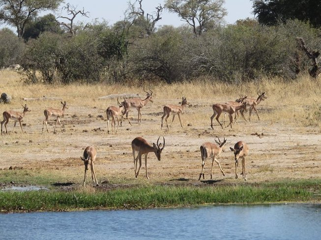2 Days Cruise Safari in Botswana