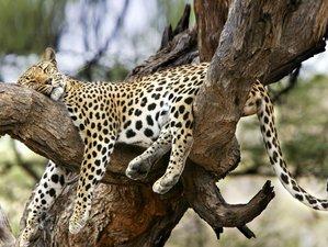 3 Days Join Group Triangle Safari in Maasai Mara National Reserve, Kenya