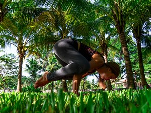 4 Day Short Back to Basic Yoga Retreat in Saraphi, Chiang Mai