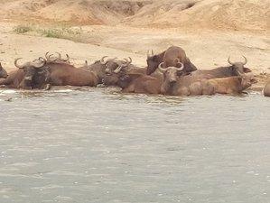 10 Day Amazing Holiday Safari in Uganda