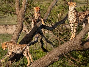 10 Days Beach Holiday and Wildlife Safari in Tanzania