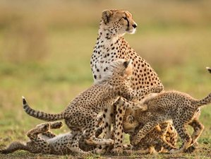 7 Days Northern Circuit Safari Tour in Tanzania