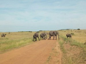 7 Days Samburu, Lake Nakuru, and Maasai Mara Safari Rift Valley, Kenya