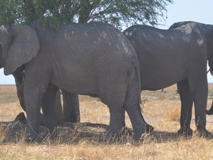 9 Days Authentic Tented Safari in Chobe National Park and Moremi Game Reserve, Botswana