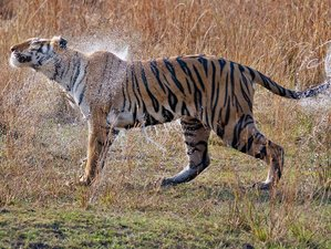 3 Day Jungle Tiger Safaris in Ranthambhore National Park