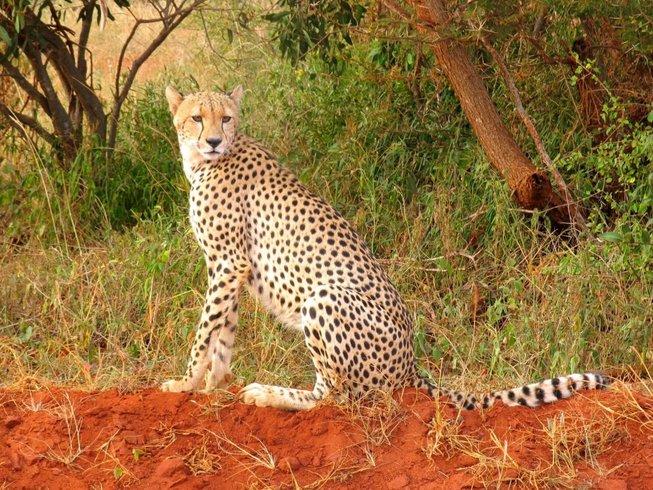 3 Days Big Five Safari in Tsavo East and Amboseli