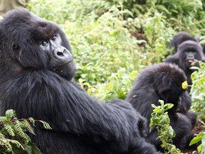3 Days Gorilla Safari in Parc Volcanoes National Park Rwanda