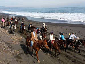 4 Day Horse Riding Holiday in Pelluhue, Maule