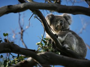 2 Days Private Wildlife Tour of the Great Ocean Road, Australia