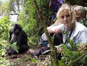 6 Days Complete Package Safari in Bwindi and Queen Elizabeth National Park, Uganda