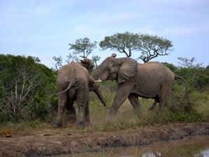 4 Days Hluhluwe-Imfolozi and St. Lucia Wetland Safari in South Africa
