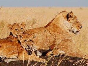 4 Days Luxury Safari in Maasai Mara, Kenya