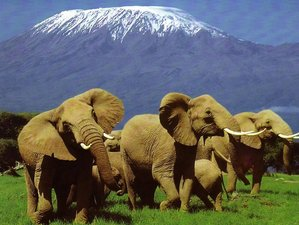 3 Days Adventure Safari in Amboseli National Park, Kenya