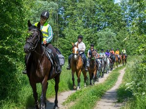 4 Days Intermediate and Advanced Trail Riding in Galiny, Poland