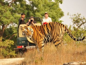 8 Days Cultural and Safari Tour in India