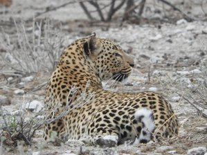 5 Days All-inclusive Guided Camping Safari in Etosha National Park, Namibia