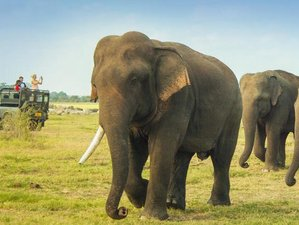 3 Day Magical Sri Lanka Safari and Cultural Tour