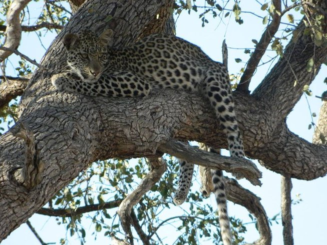 5 Days Budget Safaris in Kruger National Park