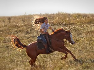 2 Days Unforgettable Luxury Horse Riding Holiday in Golan Heights, Israel