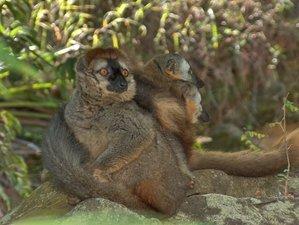11 días de safari en Madagascar con miles de vistas