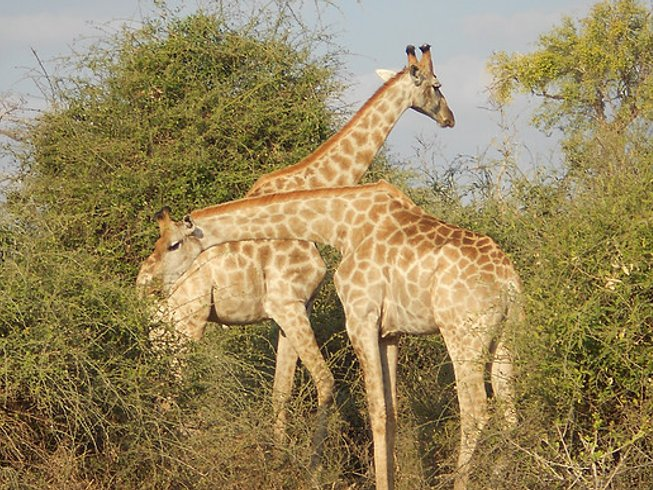 6 Days Makgadikgadi Pan and Moremi Game Reserve Safari in Botswana