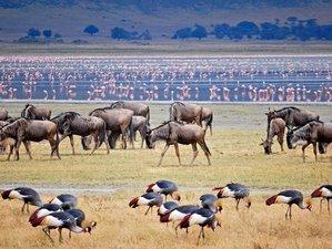 6 Days Lake Manyara, Serengeti, and Ngorongoro Crater Budget Camping Safari in Tanzania