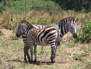 4 Days Classic Wildlife Safari Adventure in Tanzania