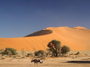 3 Days Namib Desert Camping Safari