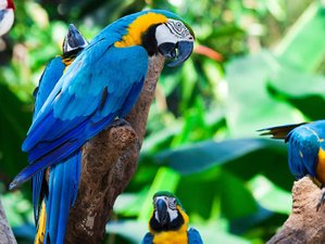 4 Day Macaw Birdwatching Expedition and Wildlife Holiday in Iquitos, Loreto