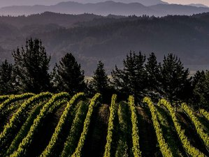 5 Day Meeting the Women in Wine: Adventures and Escapades in Napa and Sonoma, USA