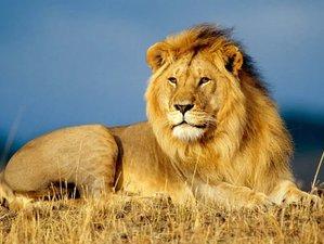 5 Days Lake Naivasha and Masai Mara Safari in Kenya