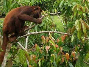 3 Day Picturesque Amazon Wildlife Tour in Maynas, Loreto