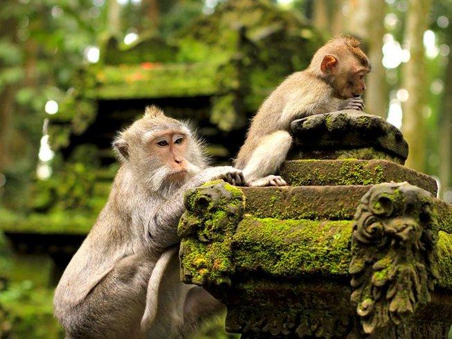 8 días retiro de yoga y meditación en Ubud, Indonesia