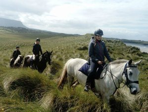 3 Days Adventurous Beach and Mountain Horse Trail Riding Holiday in Ulster, Ireland