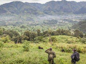 7 Days Gorilla Tracking Safari in Uganda