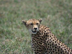 6 Days Pure Bush and Great Migration Safari in Kenya