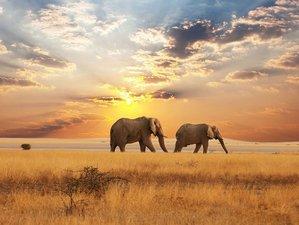 8 Days Elephant Kenya Safari