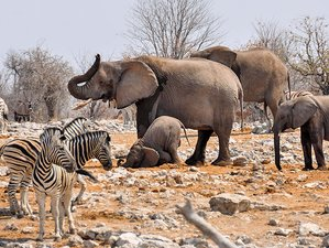 6 Days Wildlife and Sea breeze Safari in Namibia