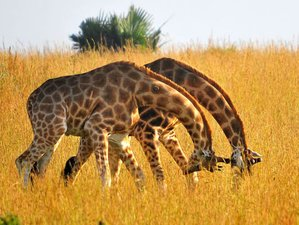 2 Days Wildlife Safari in Murchison Falls National Park, Uganda