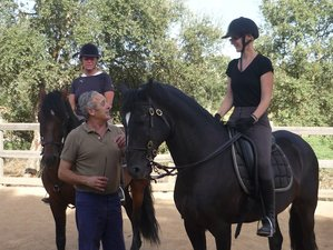 4 Days Wondrous Classical Dressage Riding Holiday in Ota, Portugal