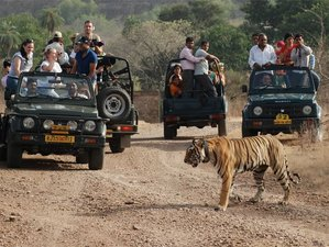 4 Day Tiger Safari in Ranthambhore National Park