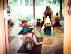 22 Day Small Group 200-Hour Vinyasa Yoga Teacher Training in Lombok, Indonesia