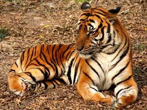 10 Days Madhya Pradesh Tour Safari in India